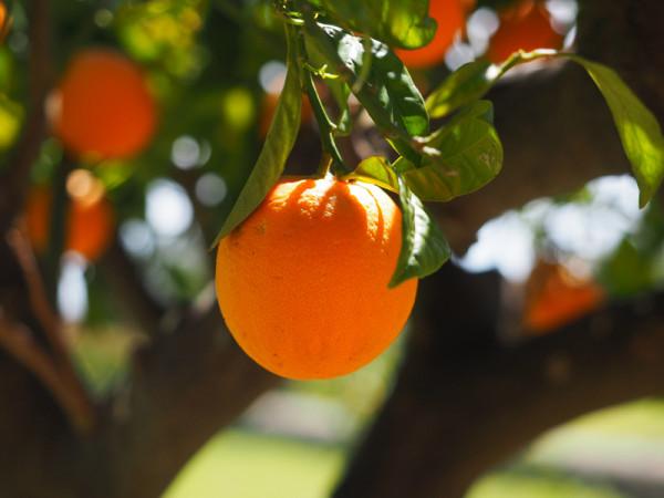 orange-1117645